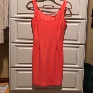 BB Dakota Dress 🍒